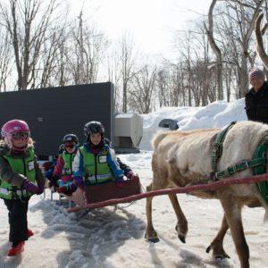 ki-niseko-reindeer-rides-11
