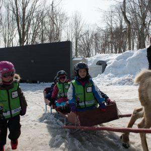 ki-niseko-reindeer-rides-12