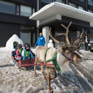 ki-niseko-reindeer-rides-4