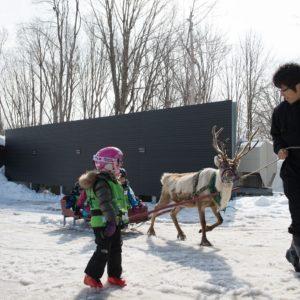 ki-niseko-reindeer-rides-7