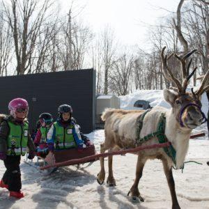 ki-niseko-reindeer-rides-9