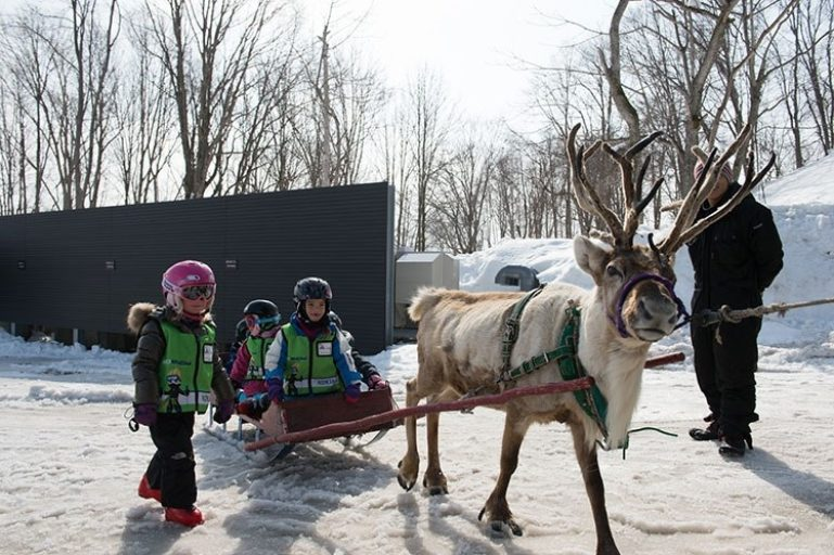 ki-niseko-reindeer-3
