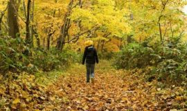 autumn-niseko-glen-banner