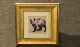 A bear drawn using fine ink strokes.