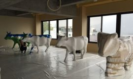 niseko-cow-parade-preparations-2