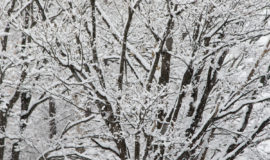 Winter Snow 1