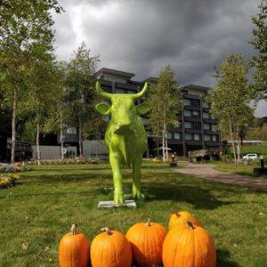 Ki Cow And Pumpkins