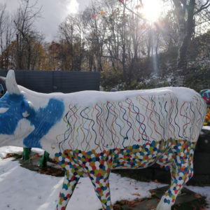 Ki Snow Cows with snow on back