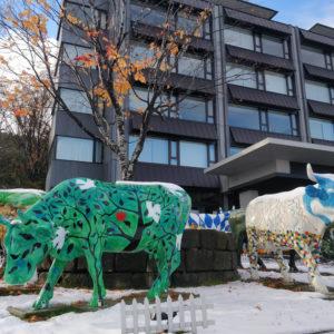 Ki Snow Cows