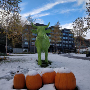Ki Snow Cows standing in snow