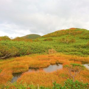 Copper coloured swamp.