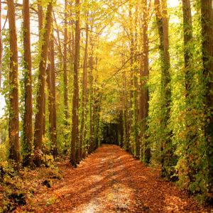 Avenue of autumn shades.
