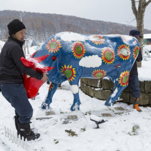 Ki Niseko staff moving the painted cow to the truck.