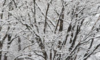 Winter Snow 1