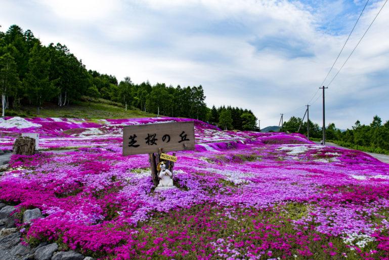 2017 Hdr Shibazakura Mishima Sans Garden Kutchan Town 3