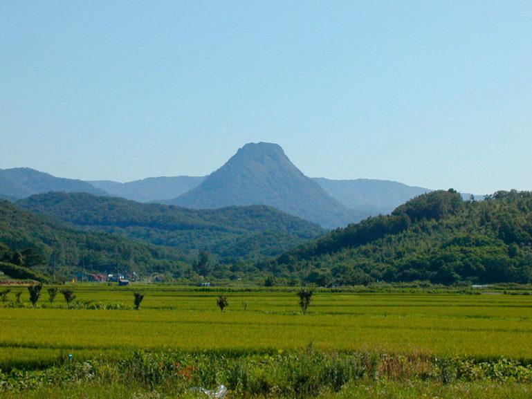 Golden Mountain Pineta Ior Shipe