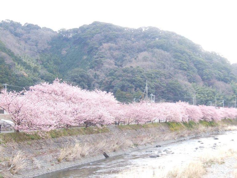 Shizuoka Sakura1