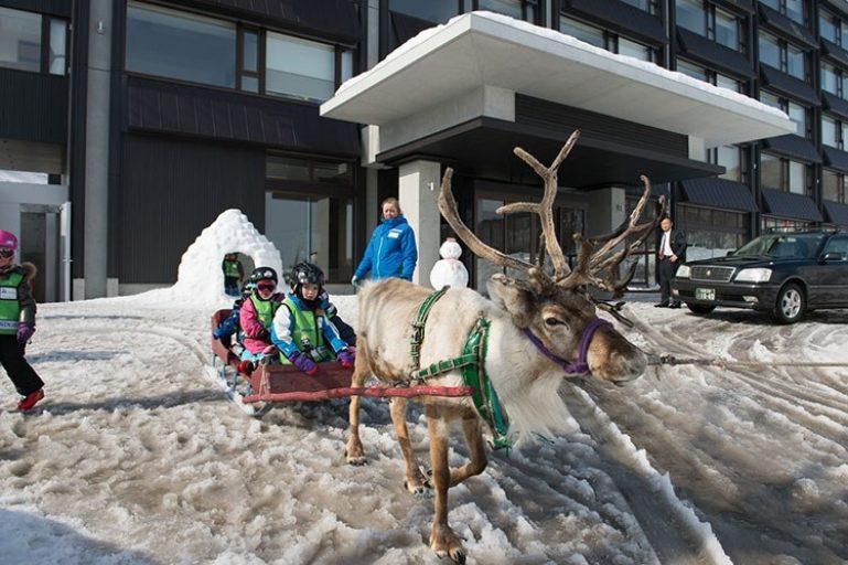 ki-niseko-reindeer-1